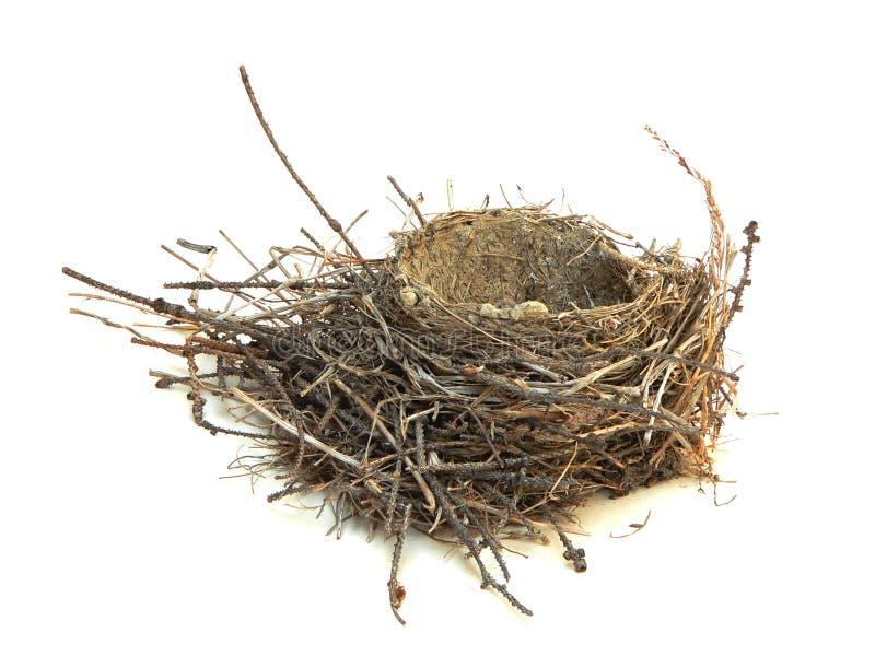 Robins Nest stockbilder