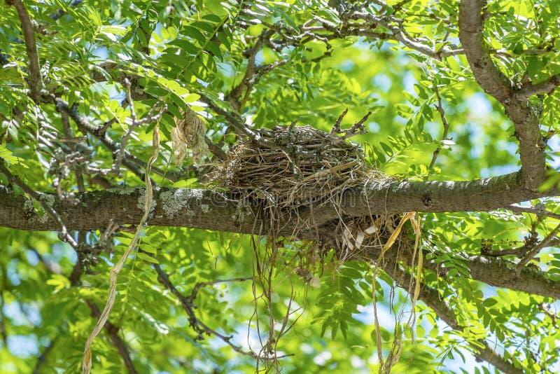 Robins Nest lizenzfreies stockfoto
