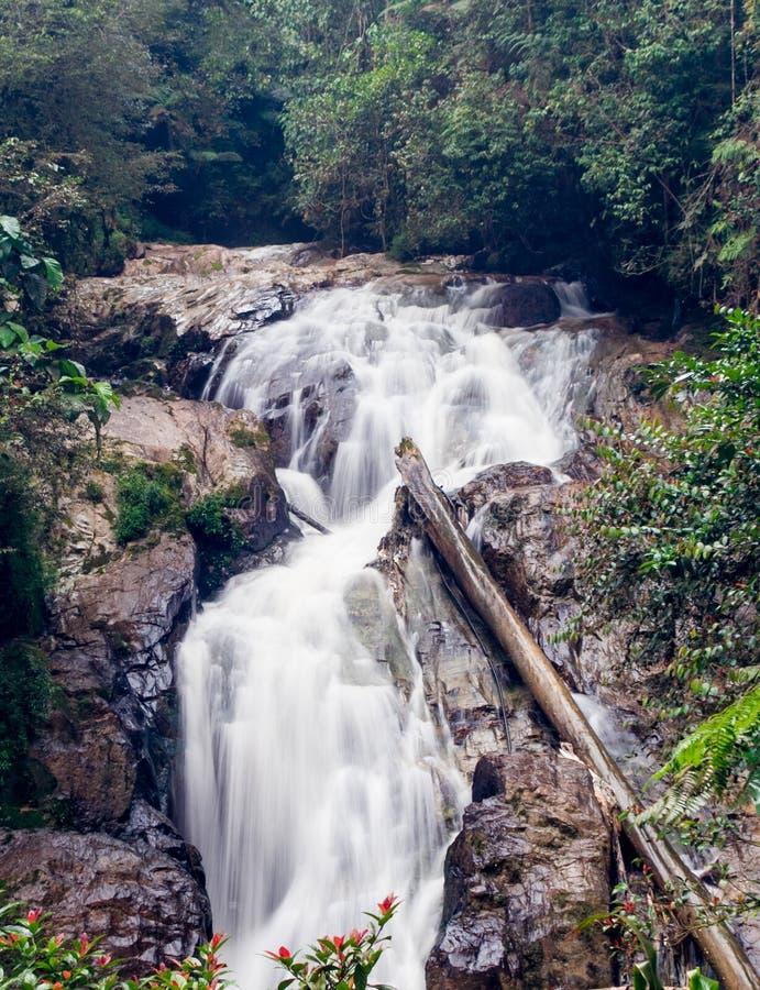 Robinson Waterfall photographie stock libre de droits