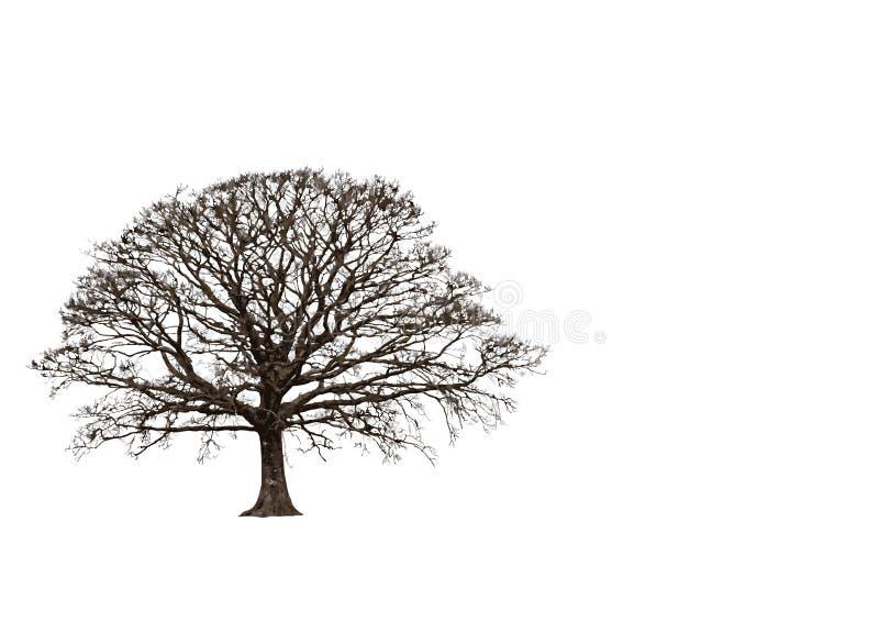 Roble abstracto del invierno ilustración del vector