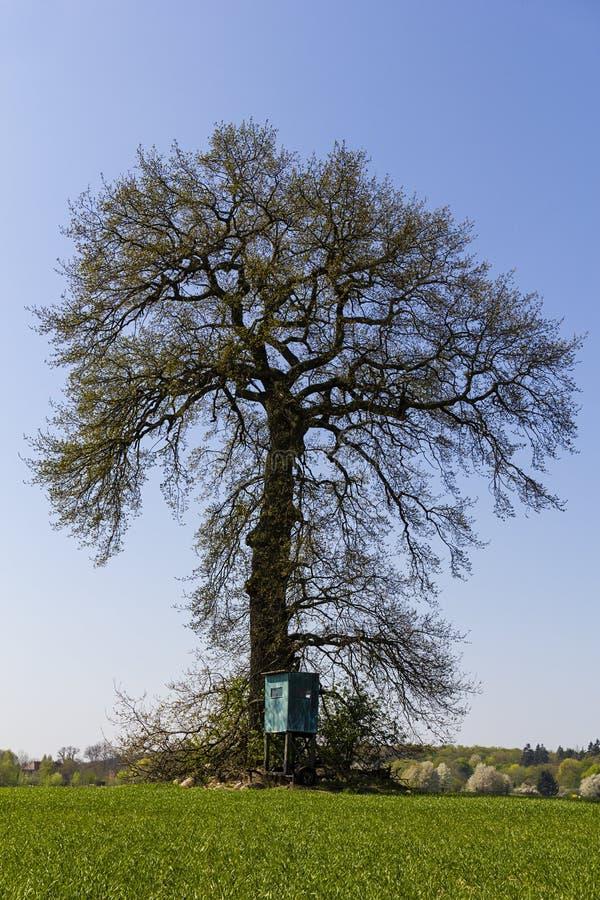 Roble grande en un campo verde con poco alto asiento en frente foto de archivo