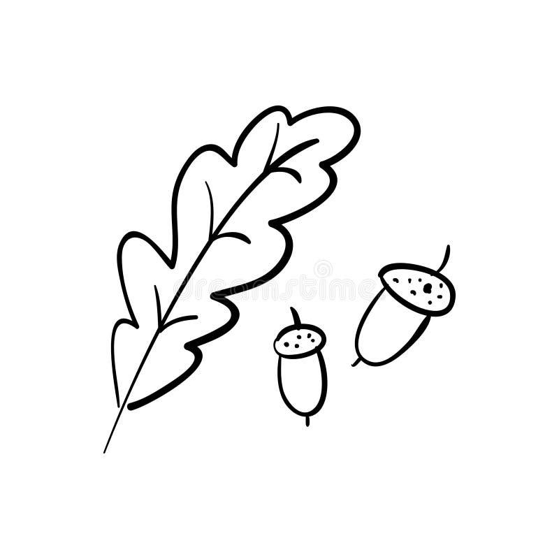 roble ramificaci?n Bellotas aisladas en el fondo blanco ilustración del vector
