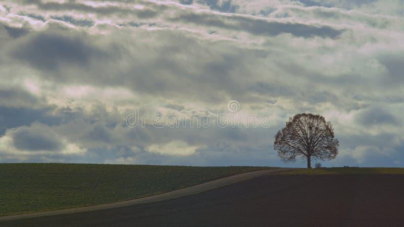 Roble viejo en una colina en la puesta del sol imagen de archivo libre de regalías