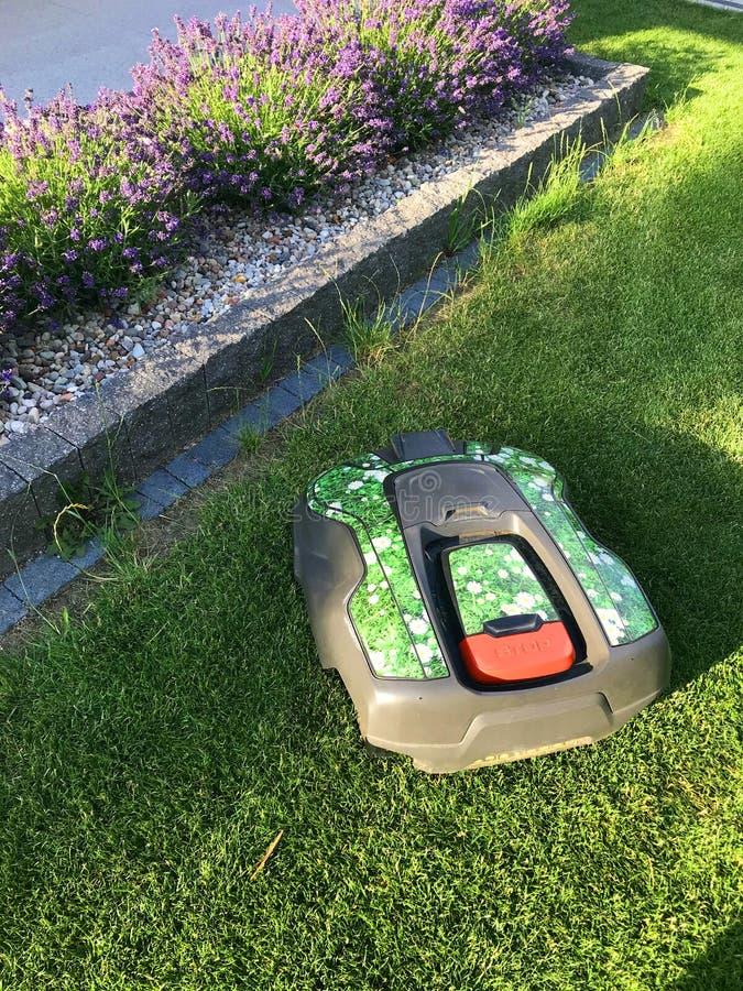 Robot de siembra de hierba trabajando en el patio trasero fotografía de archivo