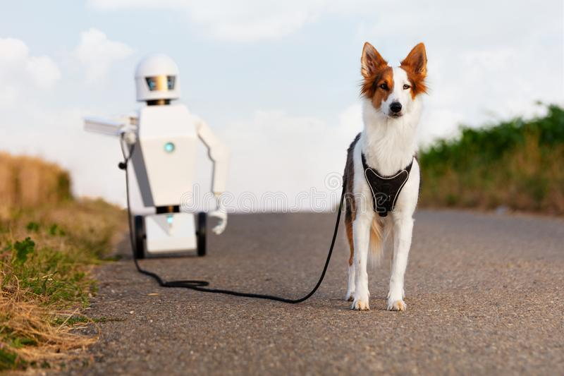 Robot is taking a walk with a dog. On a street between cornfields, concept household ai robot or ambient assisted living. robot is having his own pet royalty free stock image