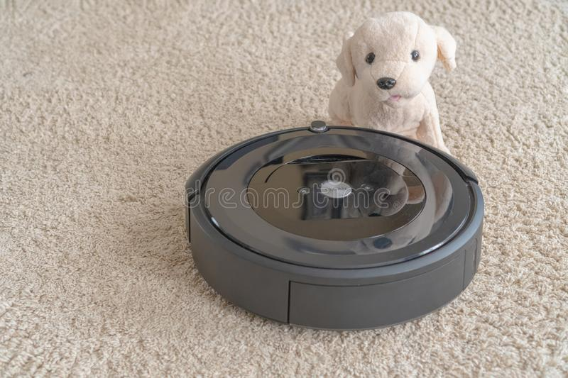 Robot vacuum cleaner with a dog on a clean beige carpet. The concept of cleanliness and comfort at home stock photo