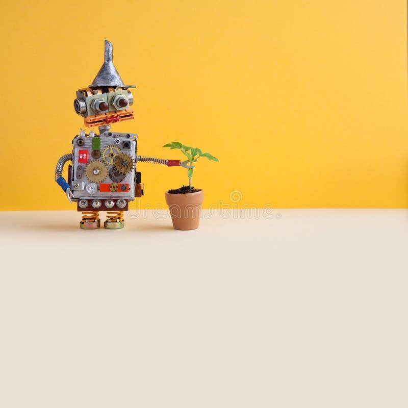 Roboten undersöker en bosatt grön växt i en blommalerakruka Konstgjord organisk livväxt för intelligens kontra Gul vägg arkivbilder