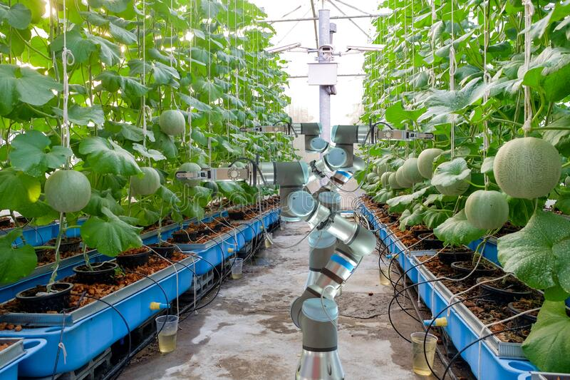 Robotica intelligente su un giardino al melone serra fotografie stock