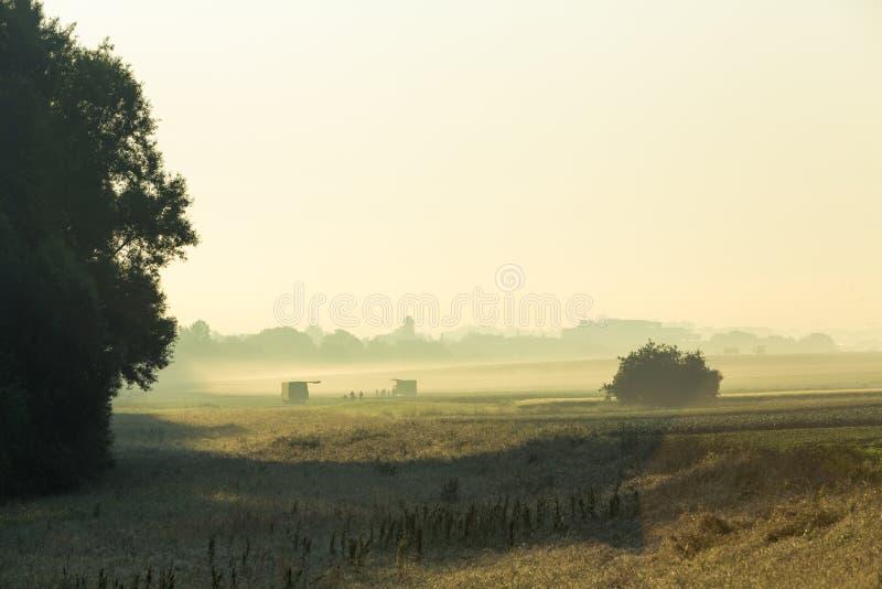 Robotnicy rolni zdjęcie stock