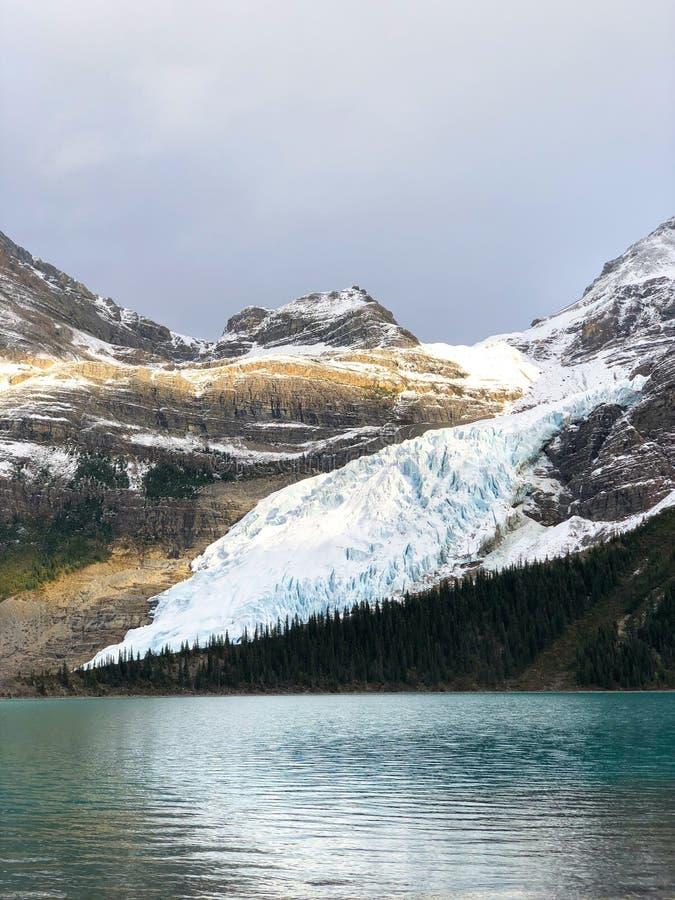 Robson Glacier stock fotografie