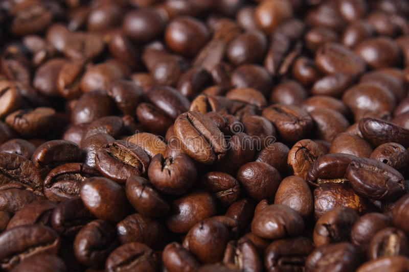 Robusta Coffee Beans royalty free stock image