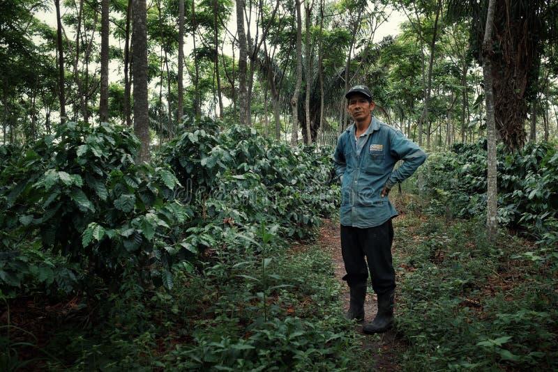 robusta kawowa plantacja z swój dumnym właścicielem obraz royalty free