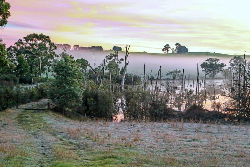 Rocío brumoso de la mañana imagen de archivo libre de regalías