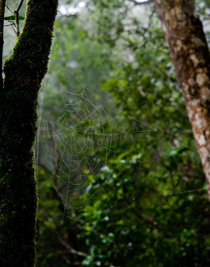 Rocío de la mañana El agua brillante cae en spiderweb sobre bosque verde fotografía de archivo libre de regalías