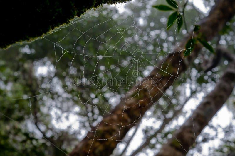 Rocío de la mañana El agua brillante cae en spiderweb sobre bosque verde fotografía de archivo