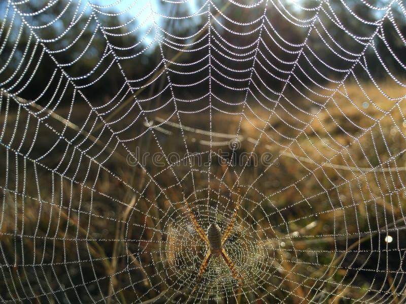 Rocío de la mañana en el web de arañas foto de archivo libre de regalías