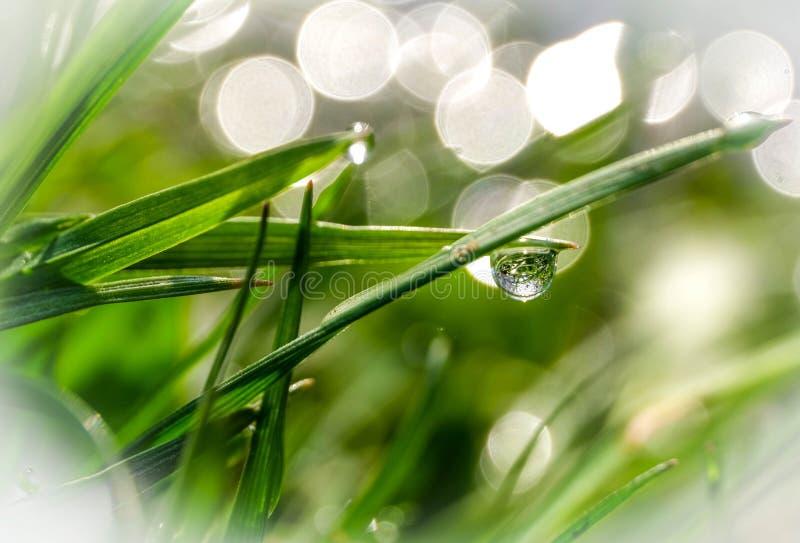 Rocío de la mañana en hierba verde recientemente crecida imagenes de archivo