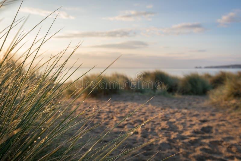 Rocío de la mañana en hierbas en la playa foto de archivo