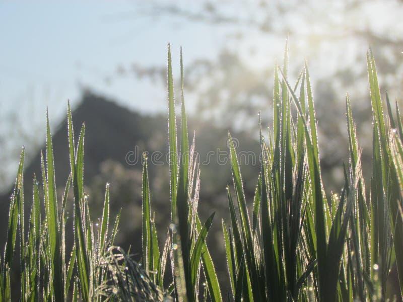 Rocío de la mañana en la hierba imagen de archivo