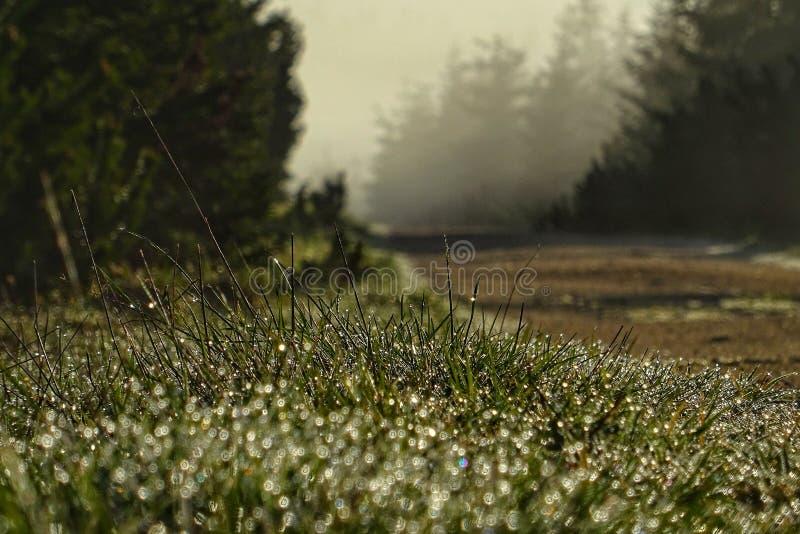 Rocío de la mañana en la salida del sol de la salida del sol imagen de archivo libre de regalías
