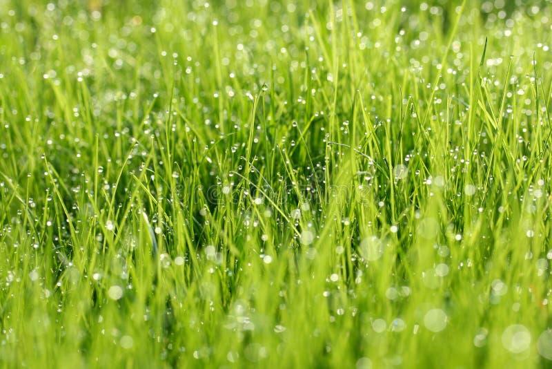 Rocío en hierba verde imágenes de archivo libres de regalías