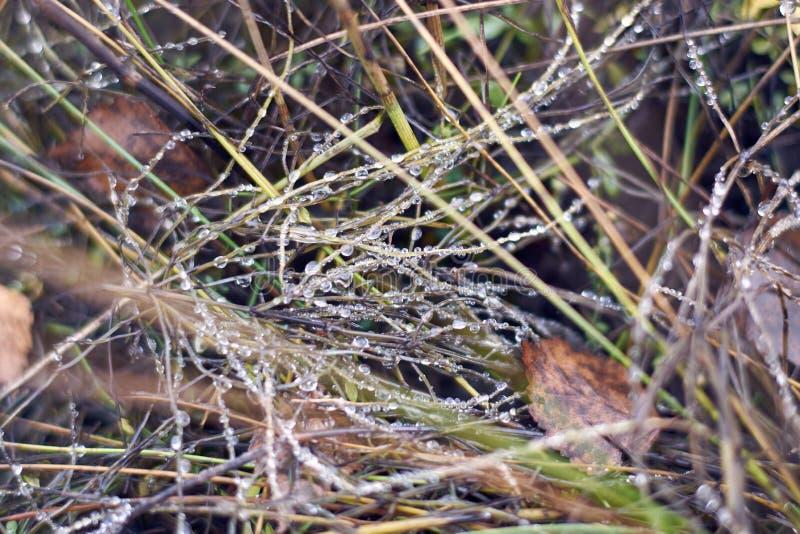 Rocío en la hierba en otoño foto de archivo