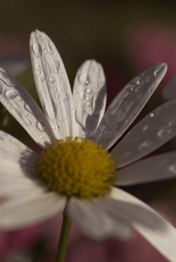 Download Rocío por la mañana imagen de archivo. Imagen de verano - 1276727