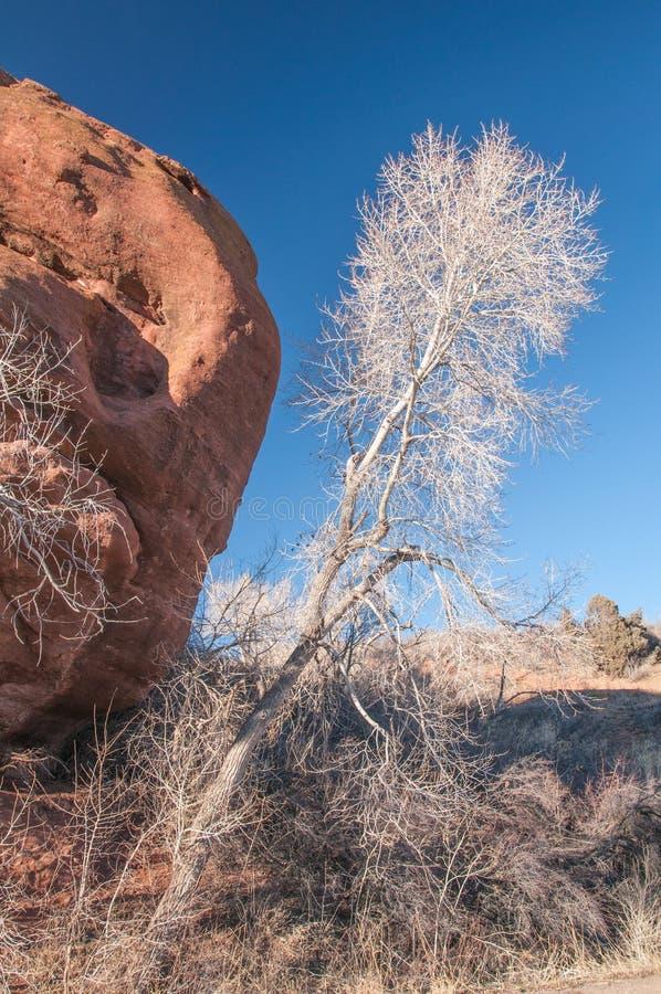 Roca blanca del rojo del árbol imágenes de archivo libres de regalías