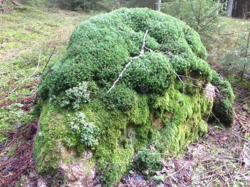 Roca Con El Musgo Y El Liquen Verdes Imagen de archivo Imagen de