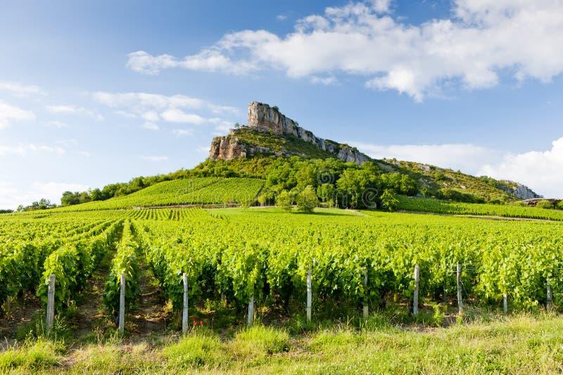 Roca con los viñedos, Borgoña, Francia de Solutre fotos de archivo