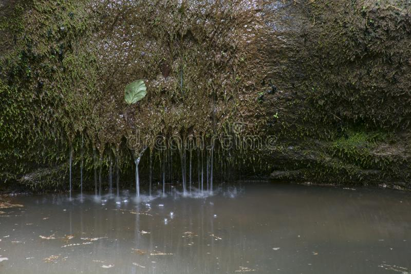 Roca cubierta de musgo con agua y una hoja imágenes de archivo libres de regalías
