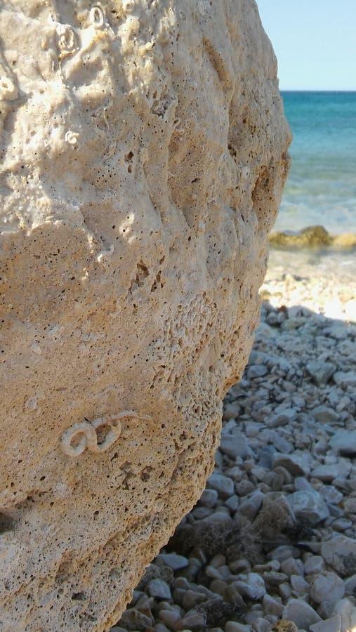Roca de Sunny Summer Day Sea Side con el fósil imágenes de archivo libres de regalías