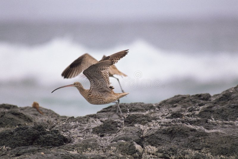 Roca debajo del pájaro fotografía de archivo libre de regalías