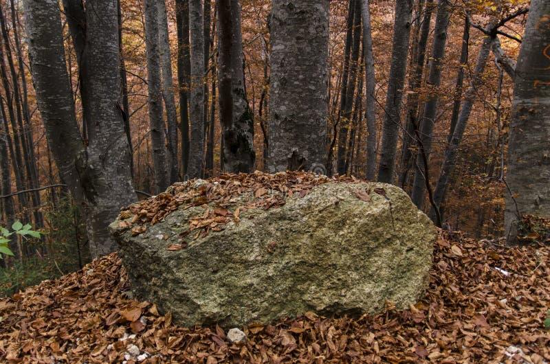 Roca grande entre árboles de haya viejos en otoño imagen de archivo libre de regalías