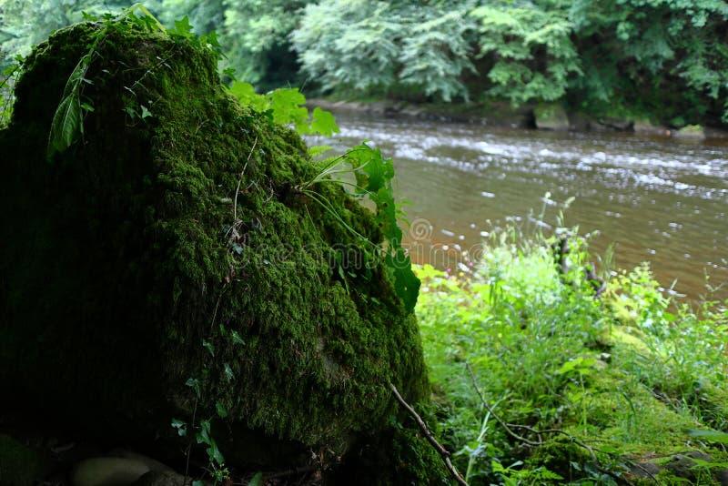 Roca overgrown al lado del río fotos de archivo