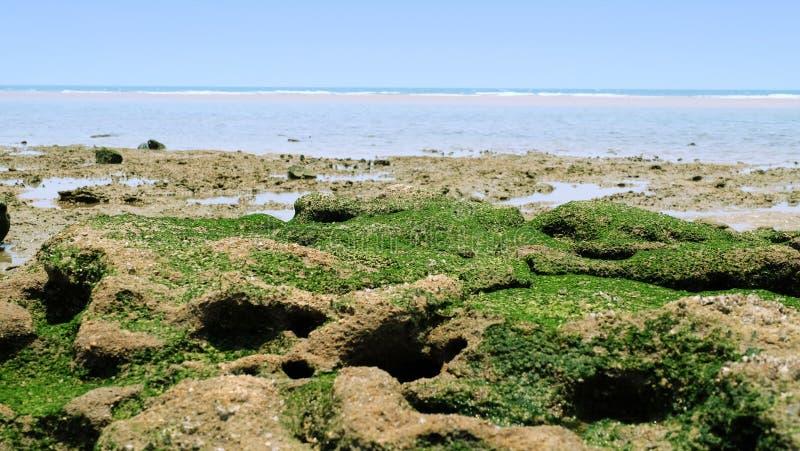 Roca verde en la playa imagen de archivo