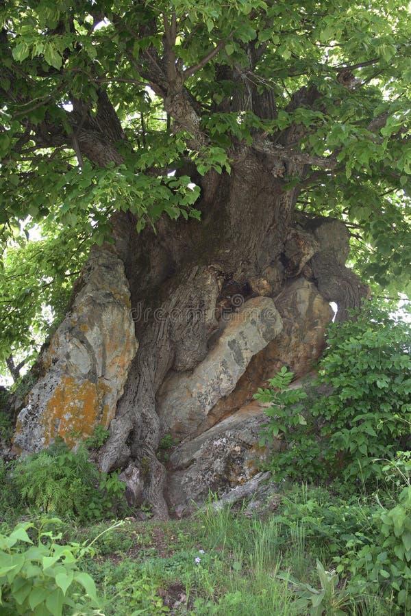 Roca y árbol fotografía de archivo libre de regalías