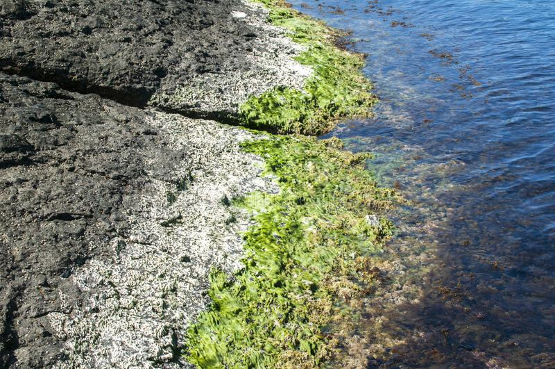 Roca y agua del mar con alga marina imagenes de archivo