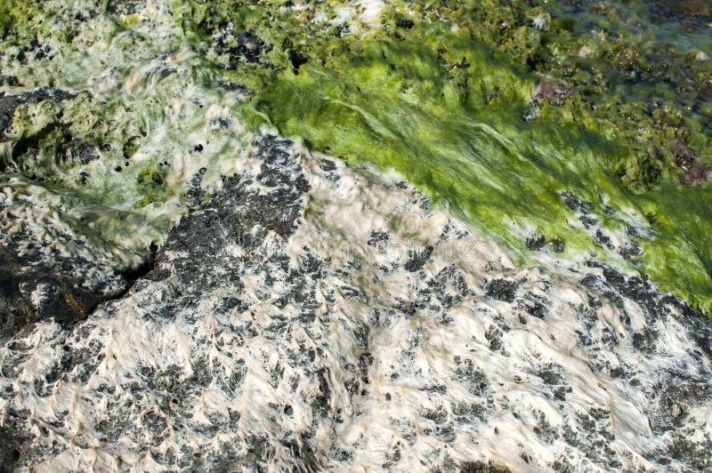 Roca y agua del mar con alga marina imagen de archivo libre de regalías