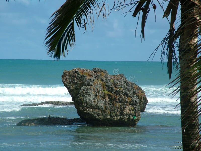 Roca y palm_2 fotografía de archivo libre de regalías