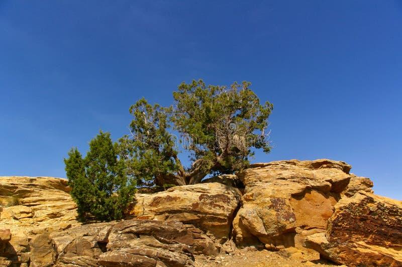 Rocas amarillas en el desierto con los pequeños arbustos torcidos que crecen encima de ellos delante del cielo azul imagen de archivo