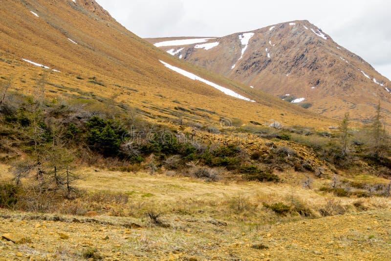 Rocas amarillas llamativas de las altiplanicies, Gros Morne National Par foto de archivo libre de regalías