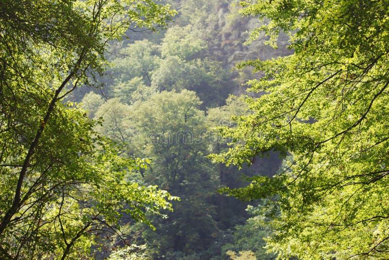 Rocas blancas Otro nombre es Eagle Rocks Región de Krasnodar Acantilados absolutamente verticales, cubiertos con piedra caliza li foto de archivo libre de regalías