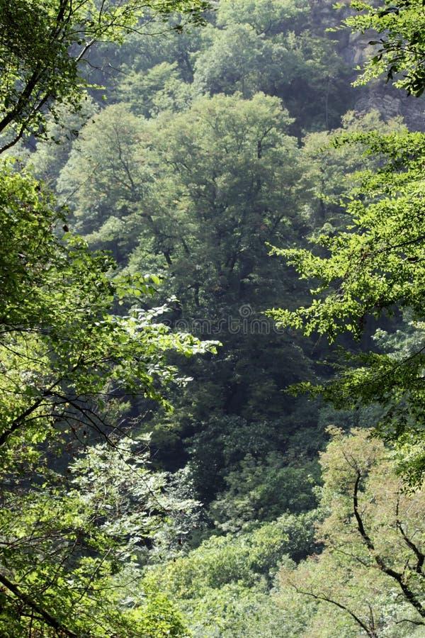 Rocas blancas Otro nombre es Eagle Rocks Región de Krasnodar Acantilados absolutamente verticales, cubiertos con piedra caliza li imagen de archivo