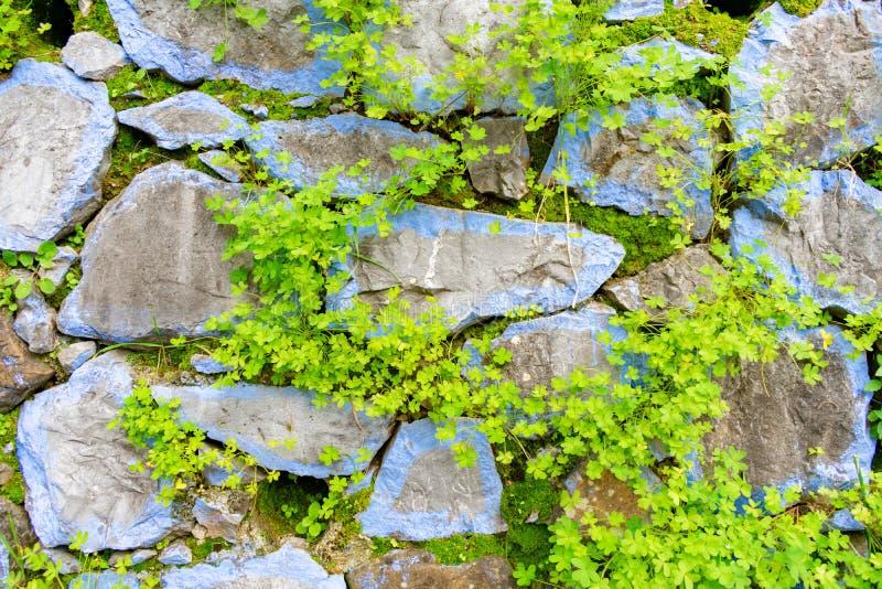 Rocas coloreadas azules con el fondo de las plantas en Chefchaouen Marruecos imagen de archivo libre de regalías