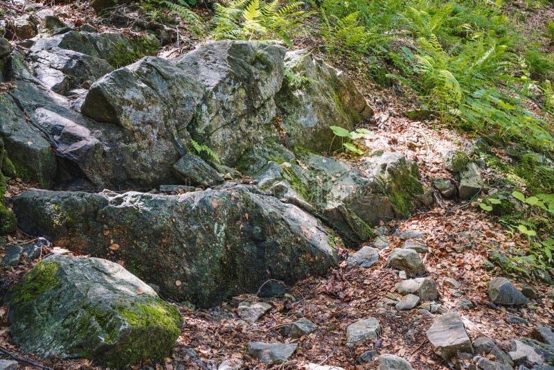 Rocas cubiertas con el musgo y los helechos en los bosques de la montaña foto de archivo libre de regalías