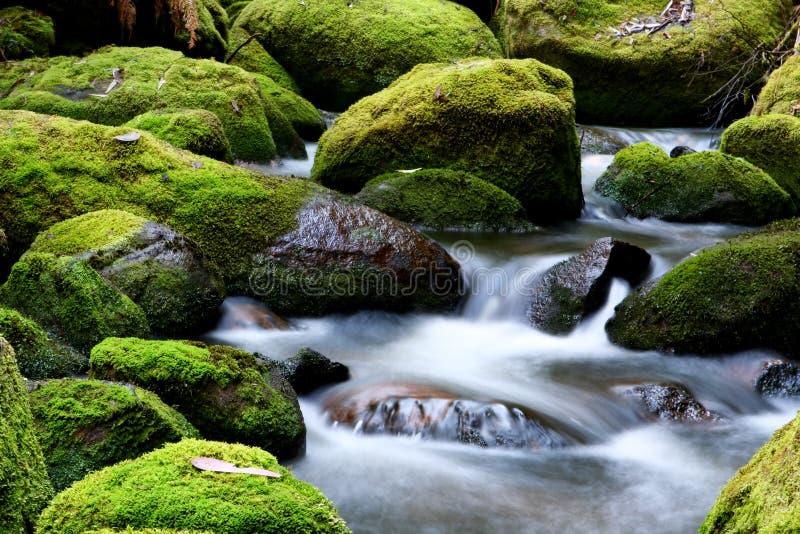 Rocas cubiertas de musgo del río imágenes de archivo libres de regalías
