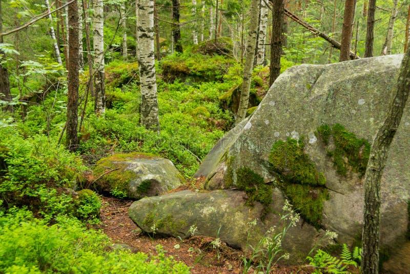 Rocas cubiertas de musgo en el bosque de Cárpatos imágenes de archivo libres de regalías