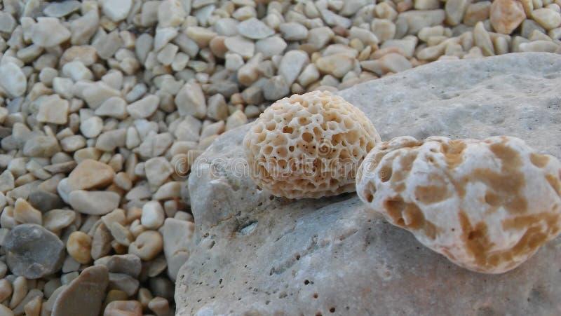 Rocas del mar en la orilla fotos de archivo libres de regalías