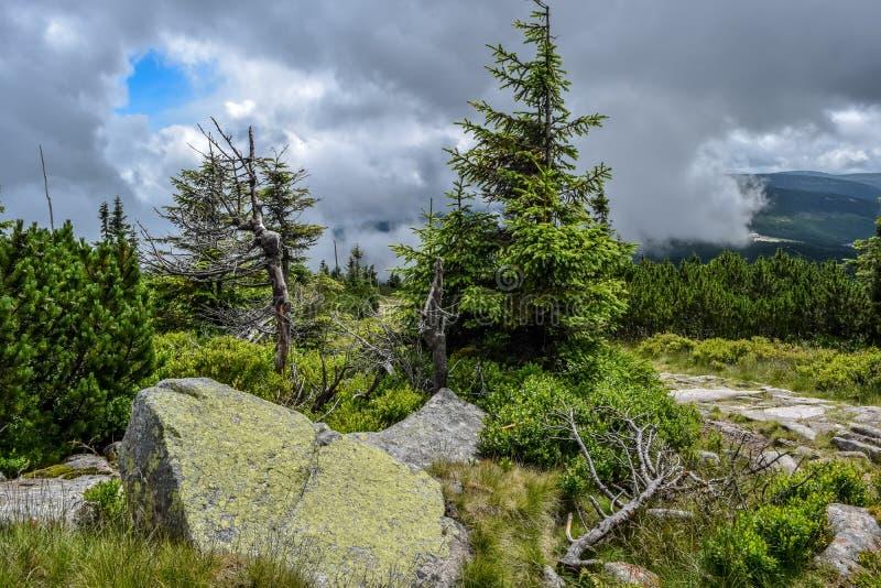 Rocas en el bosque conífero con el cielo nublado foto de archivo libre de regalías